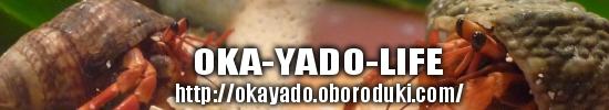 OKA-YADO-LIFE 我家のオカヤドカリへ